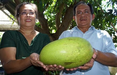 World's Heaviest Mango