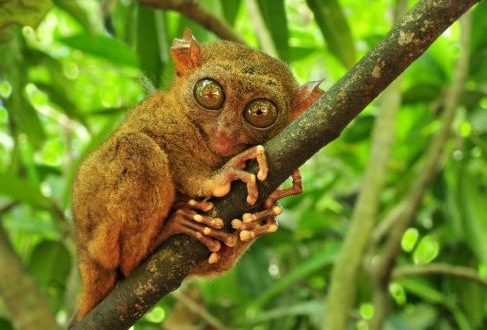 World's Largest Eyes – Mammal